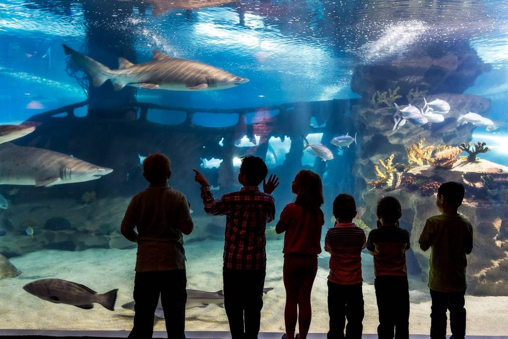 fig 12 -- Cleveland aquarium kids in front of tank --
